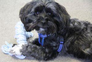 Charlie, pet dog at psychological health care